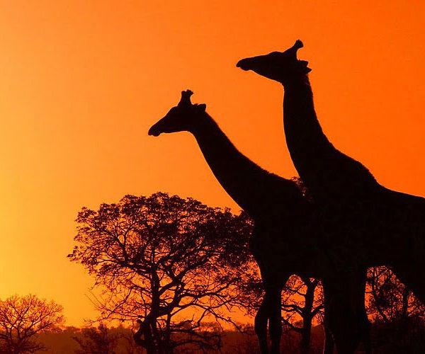 immagine Africa
