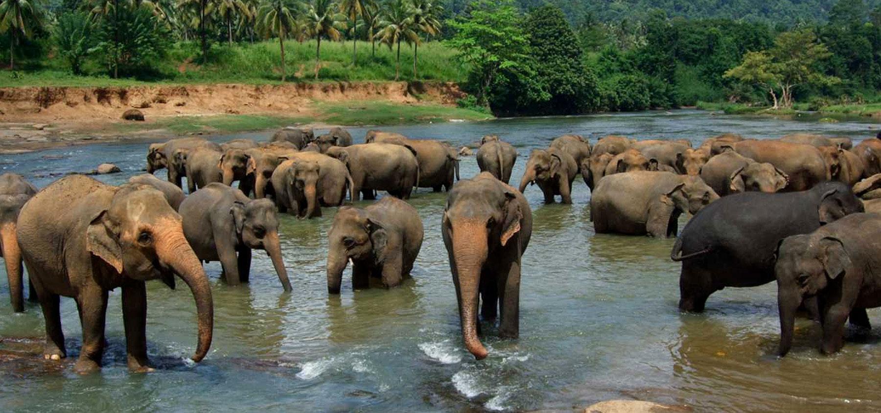 immagine 2 Sri Lanka Tour Classico