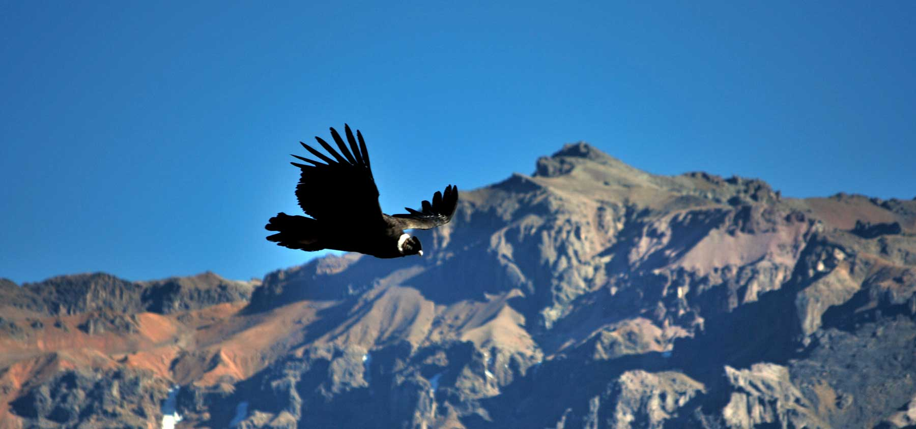 immagine per Tour 3 - Perù Classico + Colca