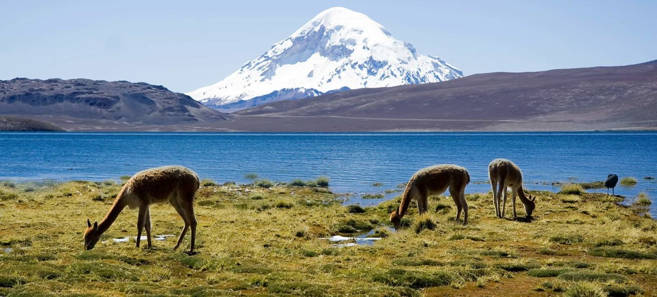 immagine per Tour Cile Nord e Isola di Pasqua